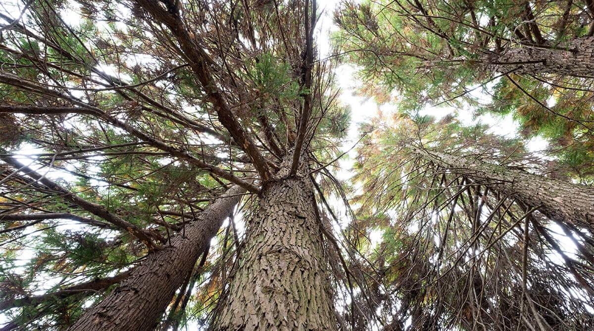 隈本コマの木育目標