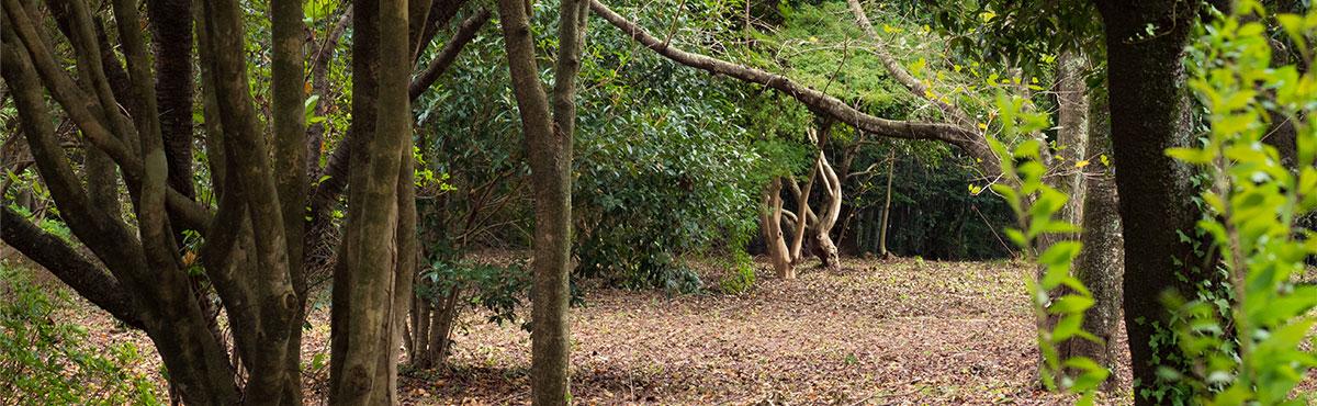 隈本コマの木育活動